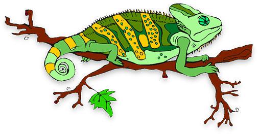 lizaed - chameleon