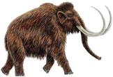 waking mammoth