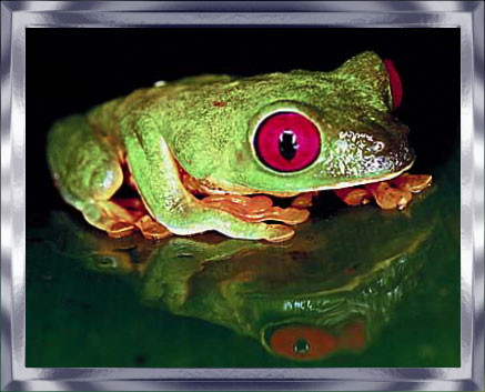 frog at night