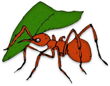 Clip Art Ant Clip Art free ant clipart black ants leaf cutter large clipart