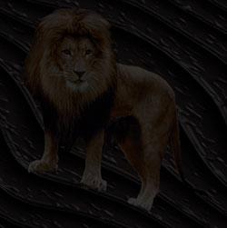 lion background image