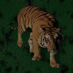 tiger background image