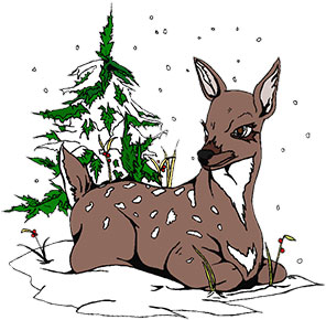deer with snow covered ground