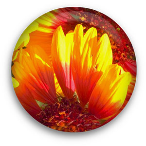 yellow and red flower button