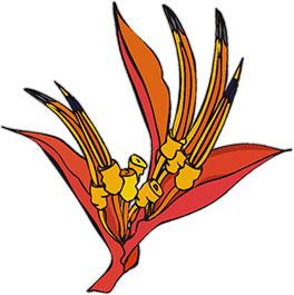 parrot beak flower