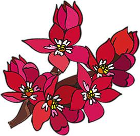 red, purple and orange flowers