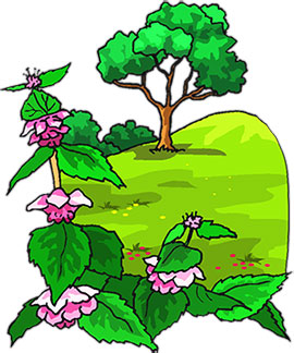 tree and flower on a hill