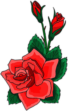 red rose with buds