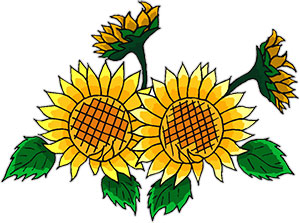 sunflower clipart