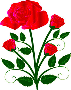 red roses and buds