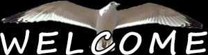 welcome bird